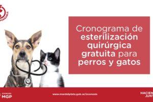 MGP Campaña de castracion de mascotas