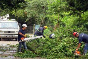 MGP - El EMSUR atendio reclamos por caida de arboles
