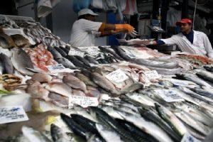 fao rastreas pescado