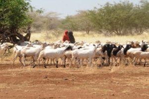 fao sequía Africana